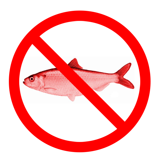 No Red Herring